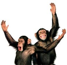 chimps dancing